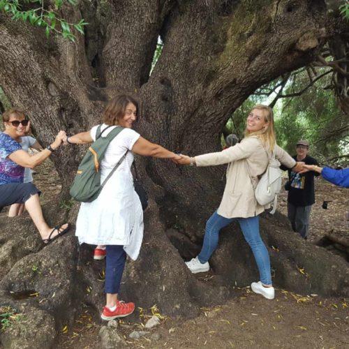 All around the 1000 yo wild olive tree
